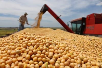 Falta de chuva compromete safra de grãos em Mato Grosso do Sul