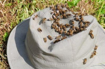 Morre em hospital idosa que foi atacada por enxame de abelhas em Ponta Porã