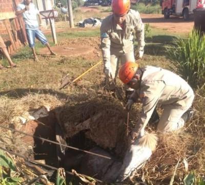 Cavalo cai em fossa e é retirado pelos bombeiros em Caarapó