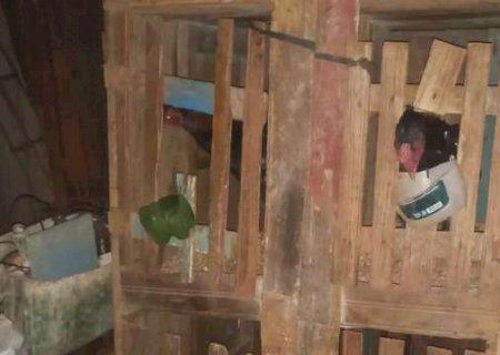 Homem é preso e 30 galos de rinha são encontrados mutilados no interior