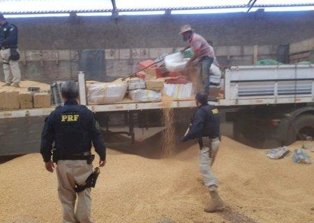 Polícia encontra 9 toneladas de maconha avaliadas em R$ 7 milhões na fronteira