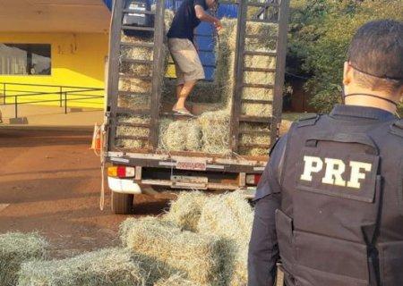 PRF apreende 7,5 mil maços de cigarros escondidos em carga de feno que saiu de Fátima do Sul