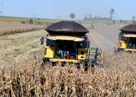 Colheita do milho acaba com cinco semanas de atraso em relação à safra passada