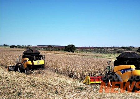 MS já vendeu 65% das 10,6 milhões de toneladas de milho que colheu