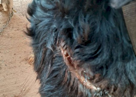 Homem corta cachorro com facão e acaba autuado por maus tratos