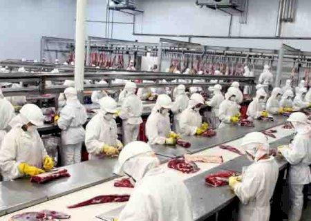 Com mercado aquecido, frigoríficos devem gerar 1 mil novos empregos em MS
