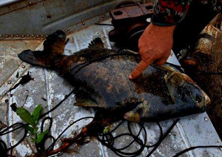 Em Deodápolis PMA desmonta acampamento e prende e autua em R$ 1 mil um pescador profissional por pescar com petrechos ilegais e apreende barco, motor, pescado e 7 redes