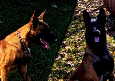 Conheça os novos cães fiscais agropecuários do Brasil