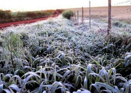 Com frio extremo, safras de grãos podem ser prejudicadas pela geada em Mato Grosso do Sul