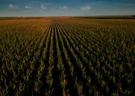 Novo zoneamento agrícola altera as janelas de plantio do consórcio milho-braquiária em MS