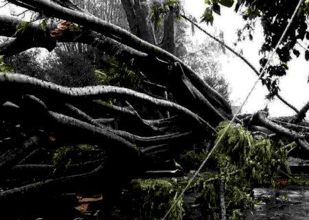 Motociclista atingido por galho de árvore em temporal teve trauma na coluna e caso é gravíssimo